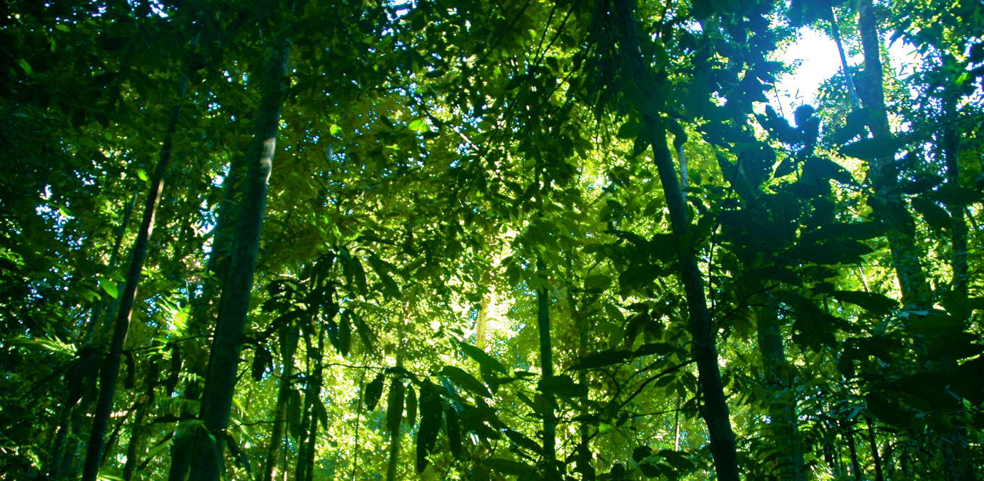 Talking Climate Change; Protecting Tropical Forests